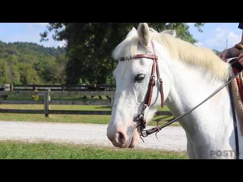 Ohio Southern - Therapeutic Horse Riding Program