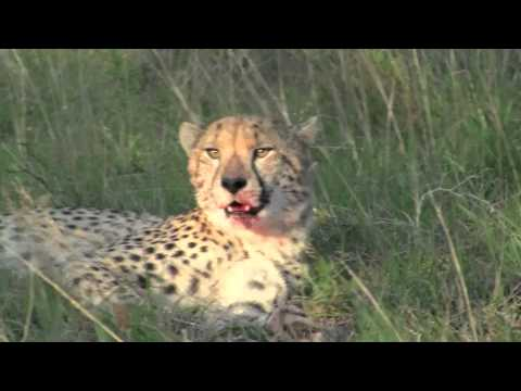 My Shamwari Game Reserve video 2010