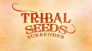 NEW: Tribal Seeds - Surrender (2016 Single)