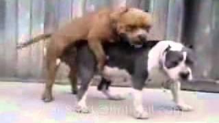 狗狗做爱做到呕.3gp