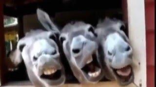 Vídeos engraçados- funny videos- risadas engraçadas.