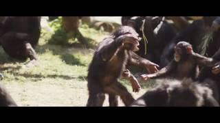 Apor - Träffa Kolmårdens apor