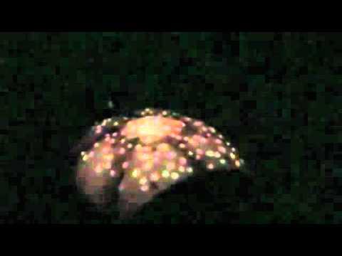 FırsatCity.com Tavana Işık Yansıtan Kaplumbağa