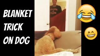 😱😂 Dog Reacts To Owner Disappearing - Blanket Trick Vine