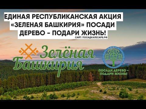 """Башкирия станет """"зеленее"""". В республике за месяц высадят более 1,5 млн саженцев"""