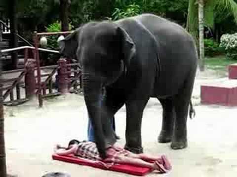 فيل يعمل مساج