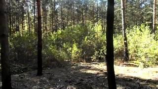Spacer po lesie.