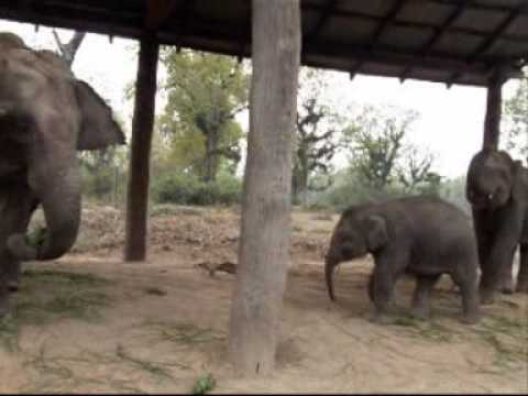 Chitwan; Elephants breeding centre