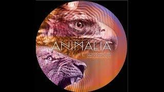 Pulsar & Thaihanu Liveset @ Animalia Festival 2017