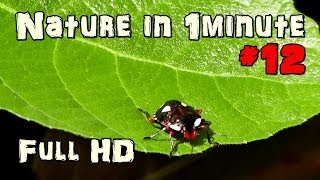 Nature In 1 minute - Beetle #12