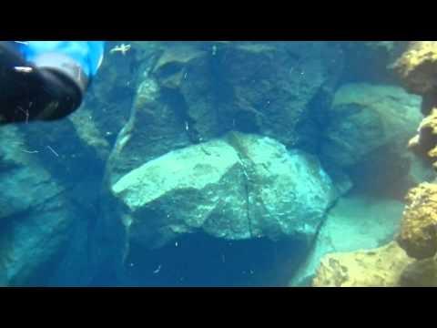 silfra spalte island schnorcheln