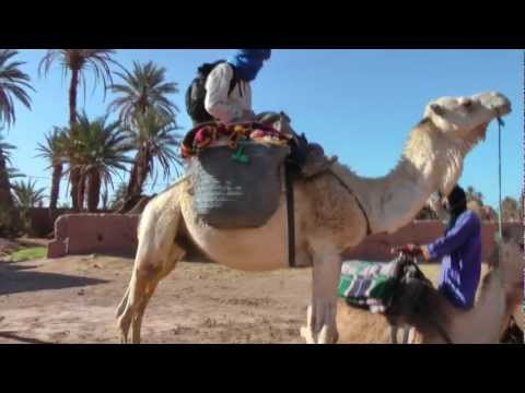 Camel Trek in the Sahara, Morocco