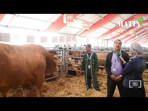 Video : Matin TV en direct du SIAM : filière bovine, les éleveurs marocains au rendez-vous de la qualité