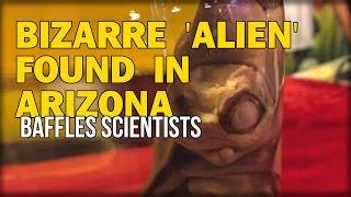 BIZARRE 'ALIEN' FOUND IN ARIZONA BAFFLES SCIENTISTS, SCHEDULED FOR DNA ANALYSIS