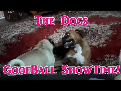 Goof Ball Show Time With Frankie & Gracie