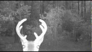 Hello? Anyone there?? Do you See Me? -- Moultrie M80-XT