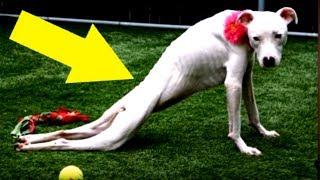 Dieser Hund hat 6 Monate nichts gegessen – Der Grund machte die Ärzte sprachlos