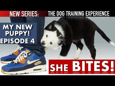 My Puppy's First Days of Training: Stop Biting, Crate Training, Come, Socialization: EP 4