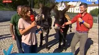 SIC/Portugal em Festa escolhe Nova Casa dos Leitões como pareceira