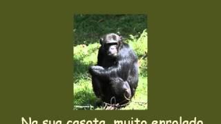 Músicas para o Jardim de infância - Olha o chimpanzé