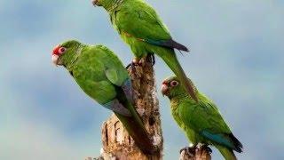 WORLD WILDLIFE  A parrot Animals