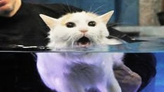 Cats Hate Water! - Funny Cats in Water Compilation 2016