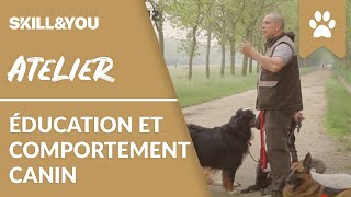 Atelier IFSA    Education et comportement canins