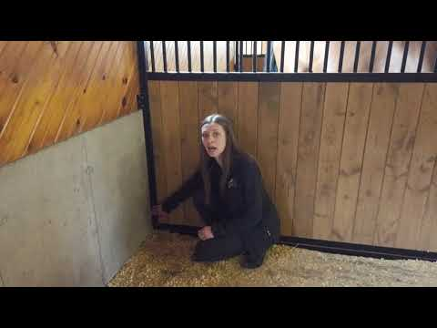 women pointing to horse stall partition