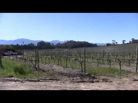 Tim's Travels – Stellenbosch, South Africa Anura Vineyards – MyWeather.com