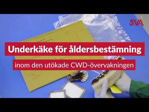 Så här packar och skickar du CWD-prover för tänder, till den utökade CWD-övervakningen i Norrbottens län.