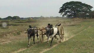 Bull racing Incredible India
