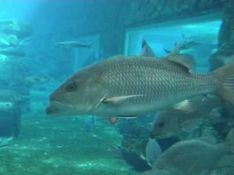 Oceanarium w Durbanie 6/8