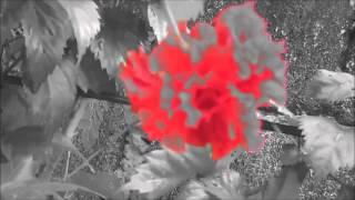 Stavros Lantsias - Epistrofi (Return)