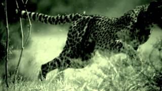 Bane - Run Away (OFFICIAL VIDEO)
