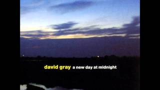kangaroo - david gray