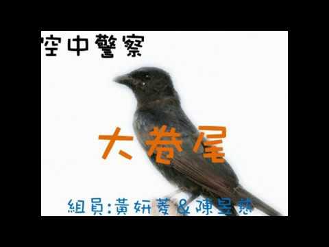 校園生態筆記~大卷尾