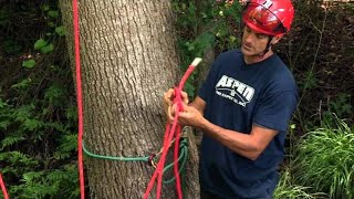 How to Rig a Tree for Ascending