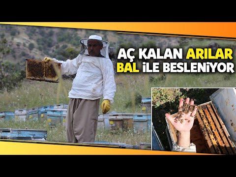 Kuraklık Nedeniyle Aç Kalan Arıları, Onlardan Aldıkları Balla Besliyorlar
