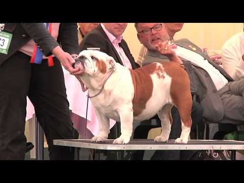 Southern Counties Dog Show 2017 - Utility group FULL