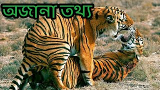 Royal bengal tiger in bengali | fact about royal bengal tiger in bangla