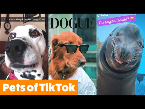 Silly TikTok Pets Funny Pet Videos