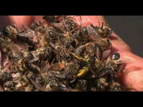 The Bee Apocalypse Is Real: Over Half A Billion Bees Dropped Dead In Brazil Within 3 Months