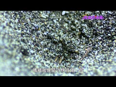 《昆蟲捉迷藏》蝴蝶觸角與蜻蜓身體【沙地裡的刺客:蟻獅】 - YouTube