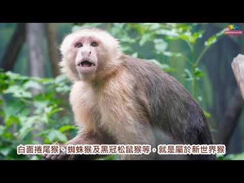 動物尾巴形形色色~功能獨特不可或缺 - YouTube