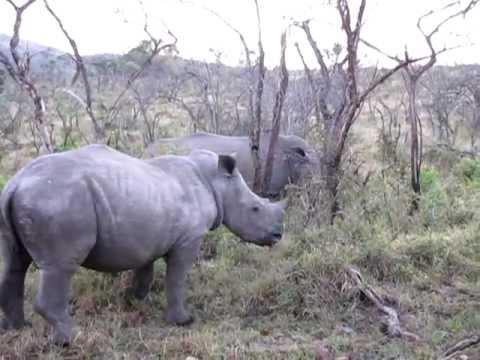 "Meet the Rhino""s"