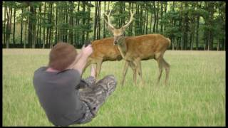 Deer Kill (Green Screen)