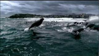 Planeta Terra BBC trailer