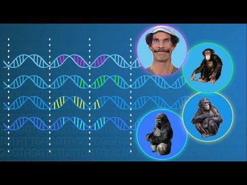 ¿Cómo sabemos que la evolución está ocurriendo?