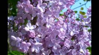 Rachmaninoff: Lilacs, Op.21 No.5