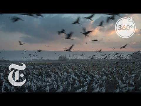 Feeding Half A Billion Migrating Birds At Israel Rest Stop | The Daily 360 | The New York Times